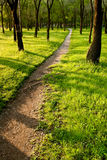 Path in the morning park Royalty Free Stock Image