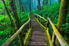 Path with moss in the forest Stock Photo