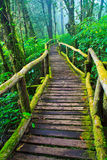 Path with moss in the forest Royalty Free Stock Image