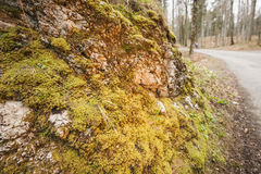 Path with moss rock stone wall. Stone wall with Moss on a hiking trail in Bavaria at autumn Stock Photos