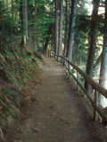 The path in the mountain forest. Stock Images