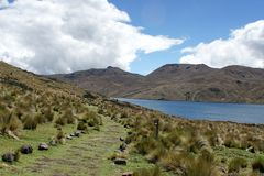 Path beside a mountain lake in the Antisana Ecological Reserve, Ecuador Royalty Free Stock Photo