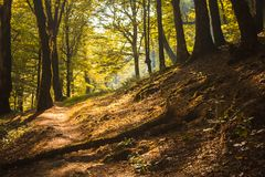 A path in the mountains. A path in the forest in the mountains Stock Image