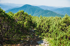 Path in the mountains Stock Images