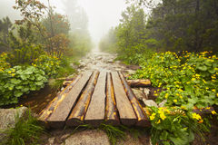 Path in the mountains Royalty Free Stock Image