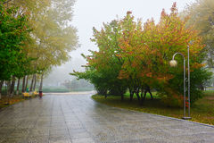 The path and multicolor trees in mist Royalty Free Stock Image