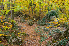 Path in mysterious Crimean forest Royalty Free Stock Photos
