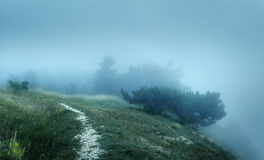Path through a mysterious dark old forest in fog Royalty Free Stock Photography