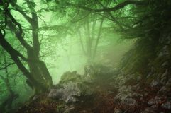 Path in mysterious forest. Path in the mysterious forest royalty free stock photos