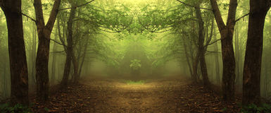 Path through a mysterious green forest Royalty Free Stock Image