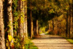 Path of mystery Royalty Free Stock Photo