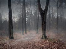 A path through a mystical misty forest. To a dark castle royalty free stock photos