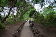 Path in Mzima Springs, scenery of a oasis in Kenya Stock Image