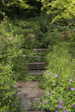 Path amongst greenery. A path of natural flagstones and stairs edged by plats Royalty Free Stock Image