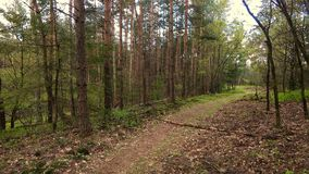 Path in the woods. Path through natural landscape with pinetrees Royalty Free Stock Photos