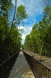 Path of nature. Tropical path of nature royalty free stock image