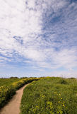 A path in nature. Gravel road in nature and light clouds Stock Photography