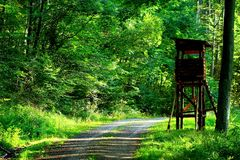 Path, Nature, Green, Vegetation Royalty Free Stock Images
