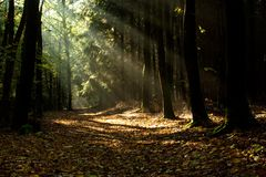 The path for nature. The image path in the mild mist with the rays of the Sun royalty free stock images