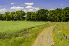 Path Through Nature. Landscape - rural - countryside - field in spring - bright day - clear sky - just a few clouds Royalty Free Stock Photography
