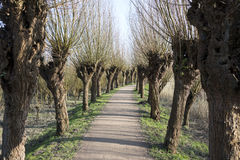 Path in nature with willows Royalty Free Stock Photos