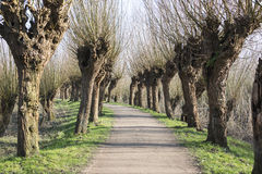 Path in nature with willows Stock Photo