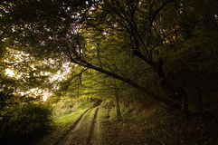 Path near a dark forest Royalty Free Stock Photography