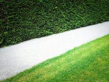 Path near green hedge Stock Image