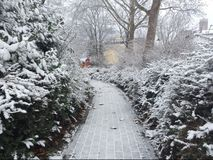 The path near the trees covered with snow. Winter day. Winter is a beautiful day in the city. Everything is covered in snow. Branches of Christmas trees in the royalty free stock photos