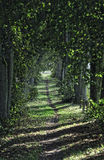 Path in nice green forest Stock Photography