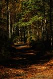 Path. Nice path in the norwegian woods Royalty Free Stock Photos