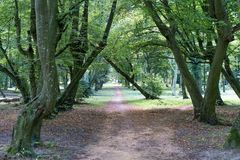 Path in nice old park. stock photography