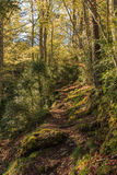 The path is nice among the tall and shady trees Royalty Free Stock Photo