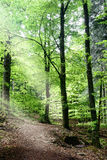 Path in nthe forest Royalty Free Stock Image