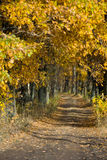 The path in the oak grove Royalty Free Stock Photography