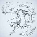 Path among oak groves. Vector drawing Stock Image