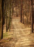 Path in old forest, road between trees Royalty Free Stock Images