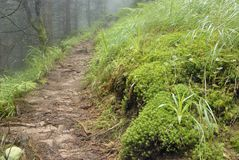 The path through the old misty forest that was mossy Stock Photos