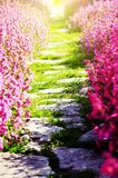 Path Over Flower Stock Images