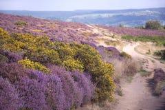 Path Over Purple Heather Moors. Path over the Purple Heather Moors, Peak District,nDerbyshire, England stock photos