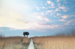Path over swamp to observation tower Royalty Free Stock Photo