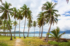 Path through a palm tree forest in Dominican Republic Stock Image
