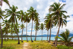 Path through a palm tree forest in Dominican Republic Stock Images