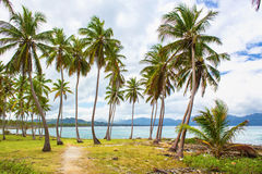 Path through a palm tree forest in Dominican Republic Royalty Free Stock Images