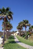 Path with palm trees avenue and street lights, Spain Stock Images