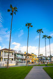 Path, palm trees and houses in Newport Beach  Royalty Free Stock Images