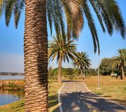 A path between the palm trees. During the sunrise at Brasília, Brazil royalty free stock photos