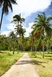 Path with palms Royalty Free Stock Photos