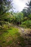 Path with palms in jungle forest. Thailand Koh Stock Images