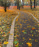 Path in park. Covered with autumn leaves Royalty Free Stock Images